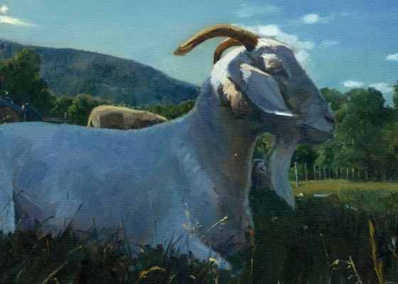 Albie the Goat - Marcus Pierno