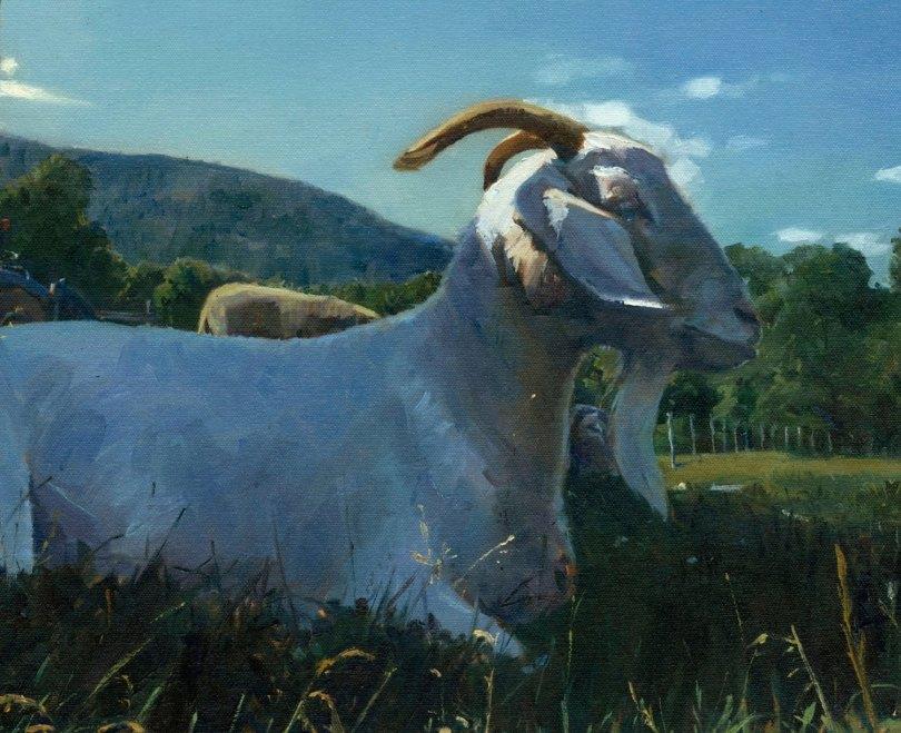 Albie the Goat - Marcus Pierno