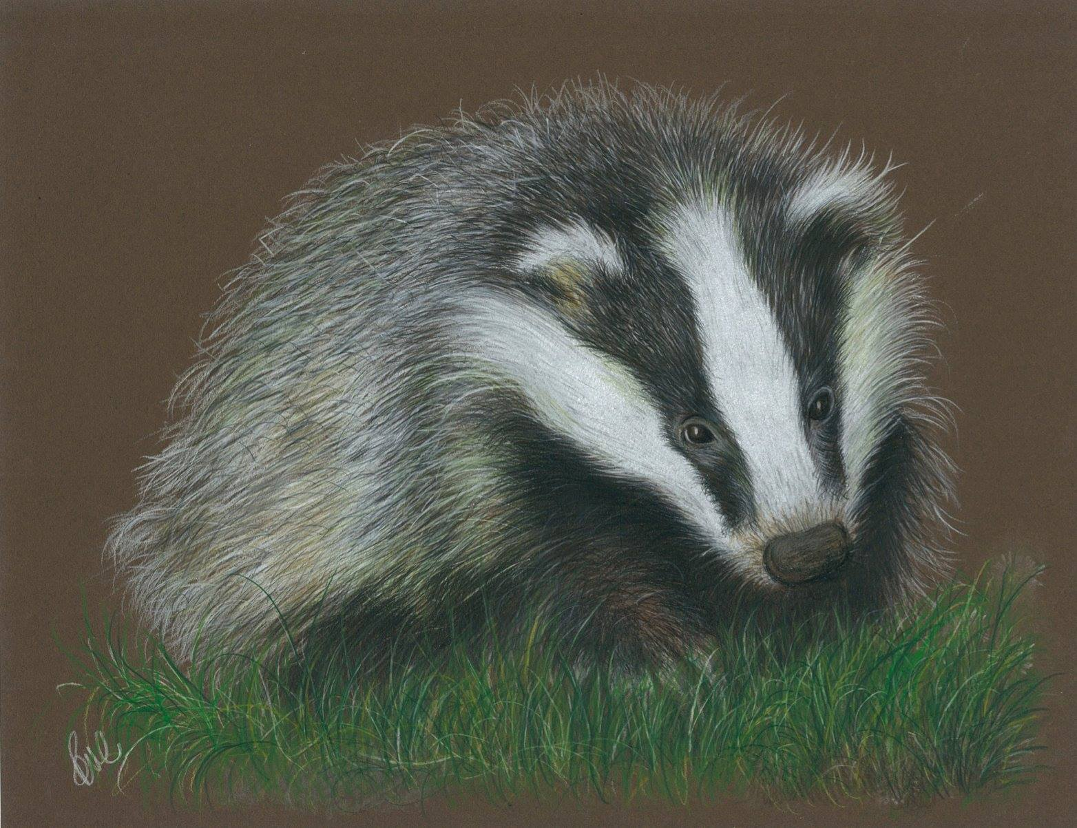 Boris the Badger - Paul Caton