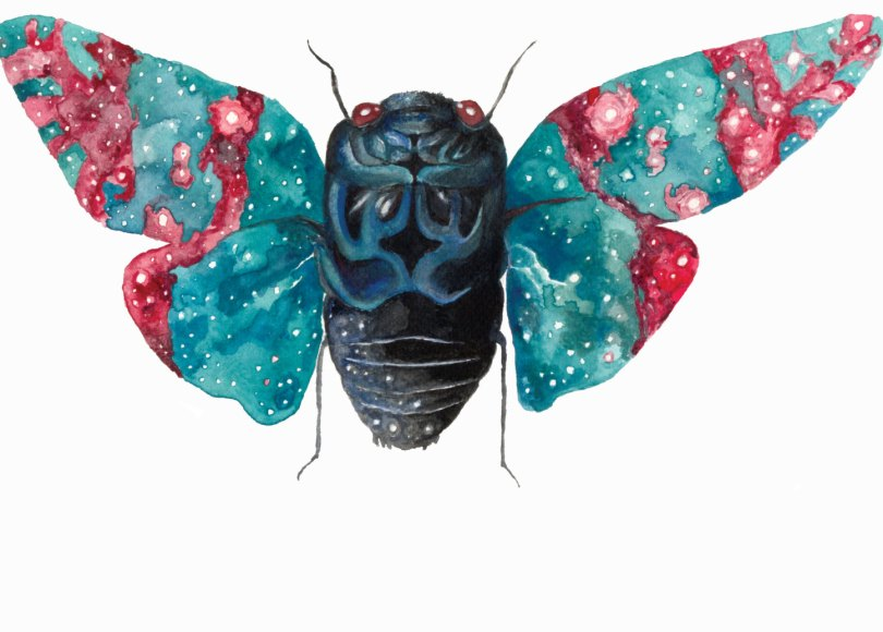 Celestial Ghost Cicada - Aaron Wright