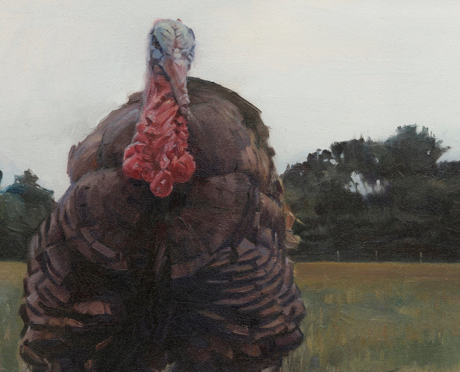 Timmy the Turkey - Marcus Pierno